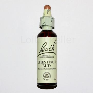 Chestnut Bud: Harilik hobukastan