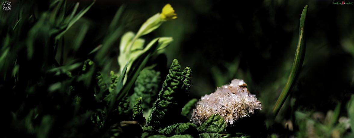Hemimorfiidi kristallid