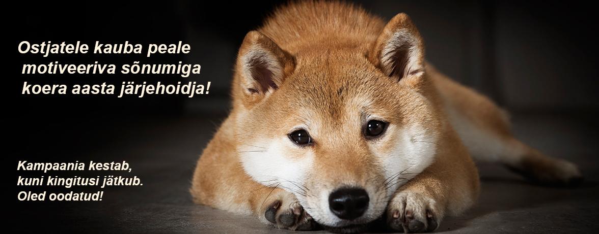Riina Klemeti koer Atha